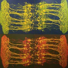 Neural Network Ensemble ( Diptych VII over Diptych III), (4) 3'x3'